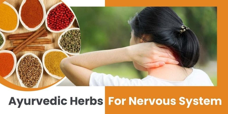 Ayurvedic Herbs For Nervous System